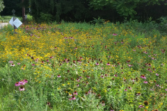 The Keith Hayes Memorial Wild Flower Meadow