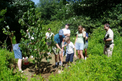 Planting a Paw-Paw in Mill Pond Park
